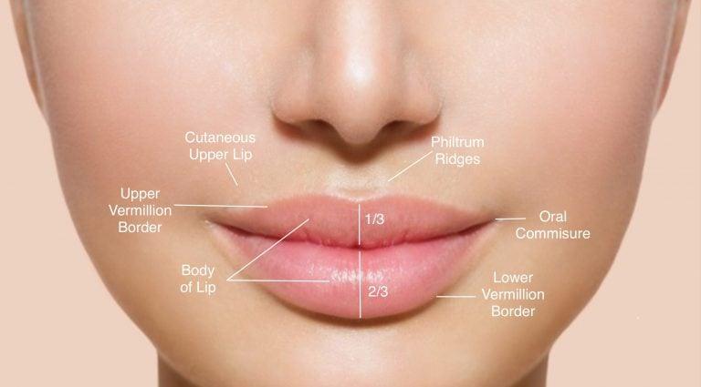 dudak anatomisi detayları
